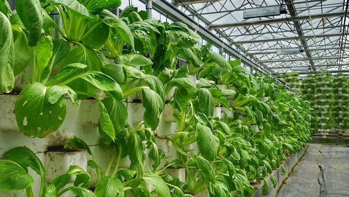 唐山晚报第六届太空蔬菜家庭种植大赛22日启动