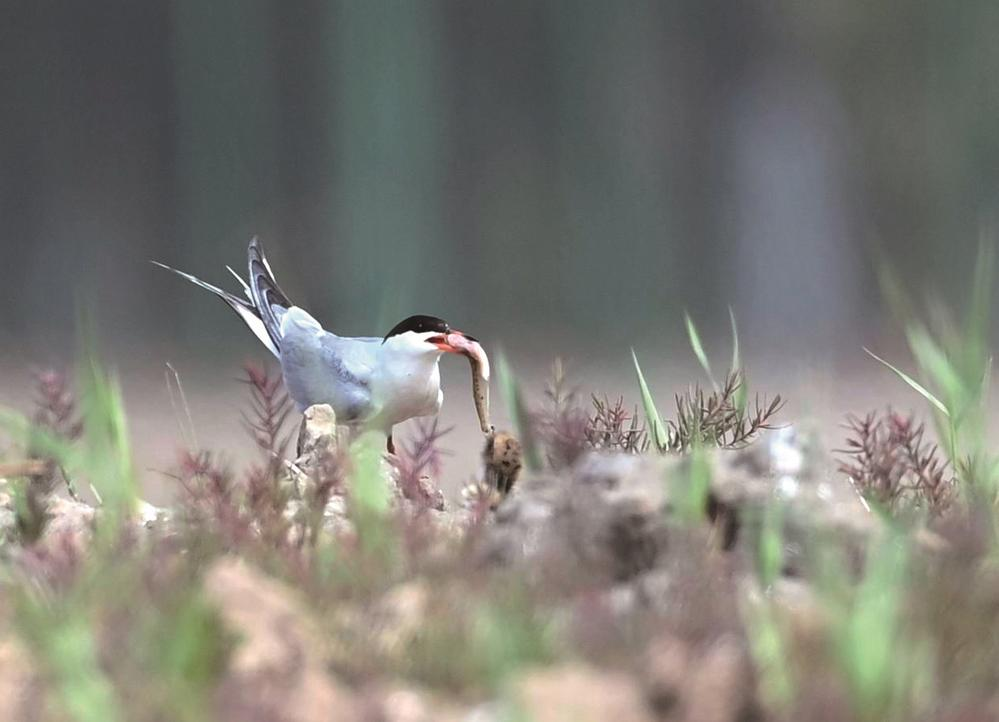 唐山:生态自然鸟类栖息地