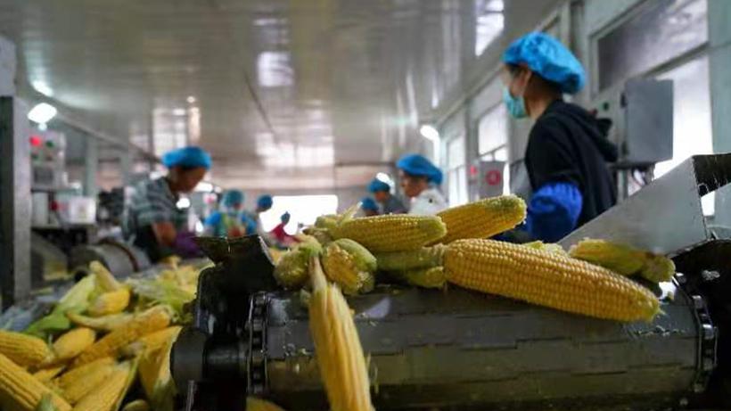 开平:产业兴农助力乡村振兴