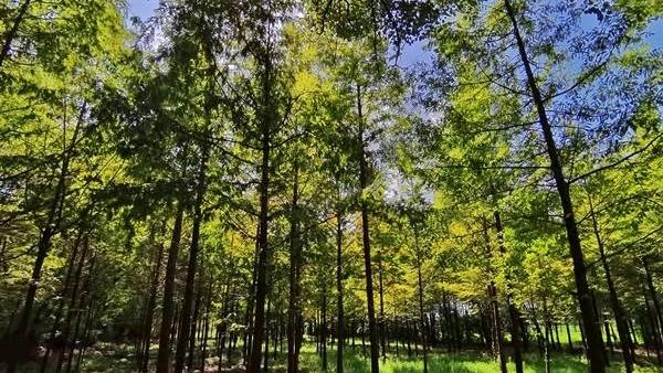 唐山11月底前全面建立四级林长制体系