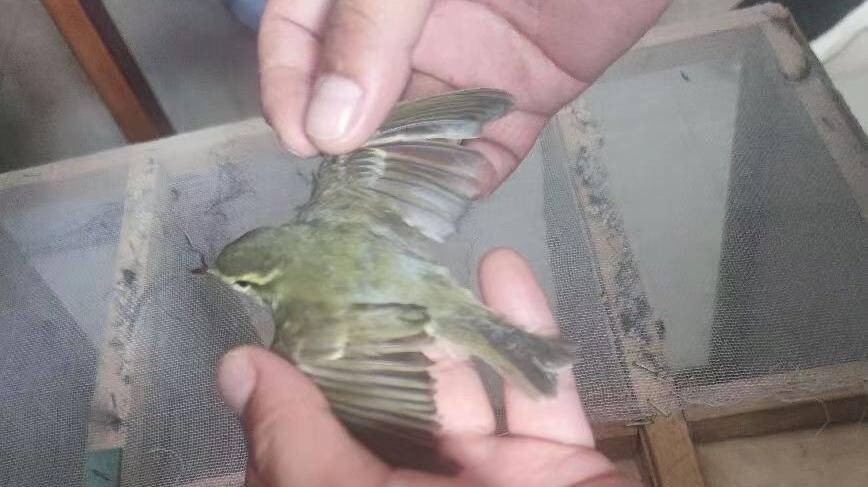 一男子架设粘网捕鸟被滦南警方当场抓获